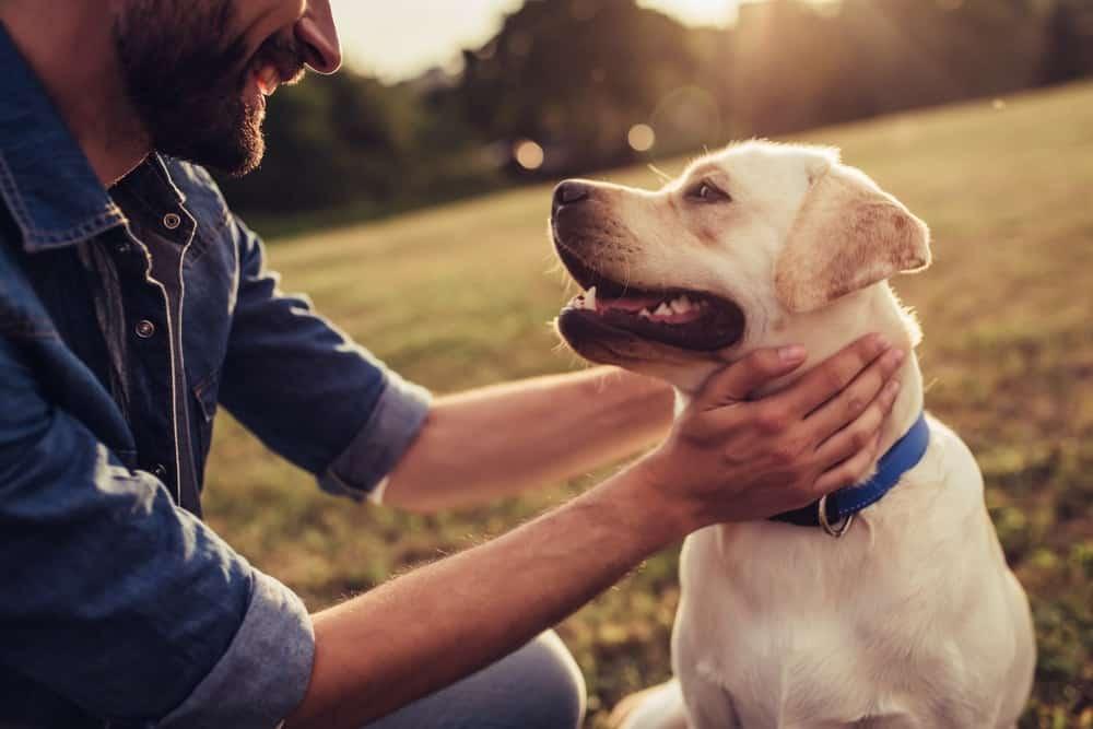 Dlaczego psy są tak lojalne?